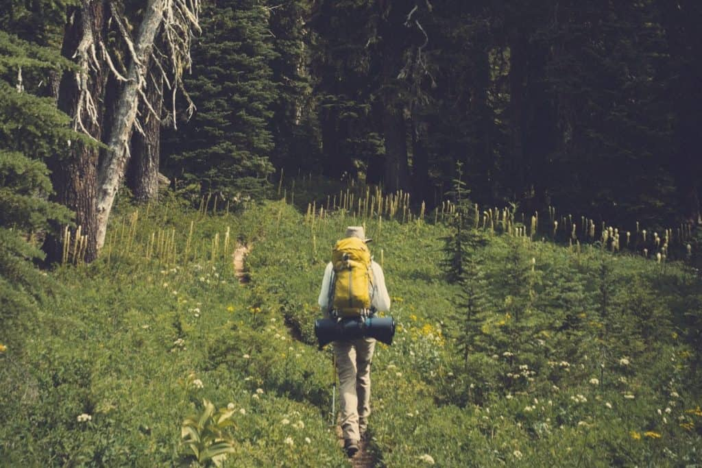 backpacker following trail into the woods